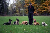 Obedience Training German Shepherds