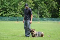 Boot Camp Training for German Shepherds