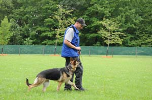 German Shepherd Boot Camp Heeling